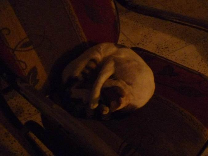 The cat at the Meeting Point Hostel in Barranquilla did nothing but sleep, but was adorable anyway.