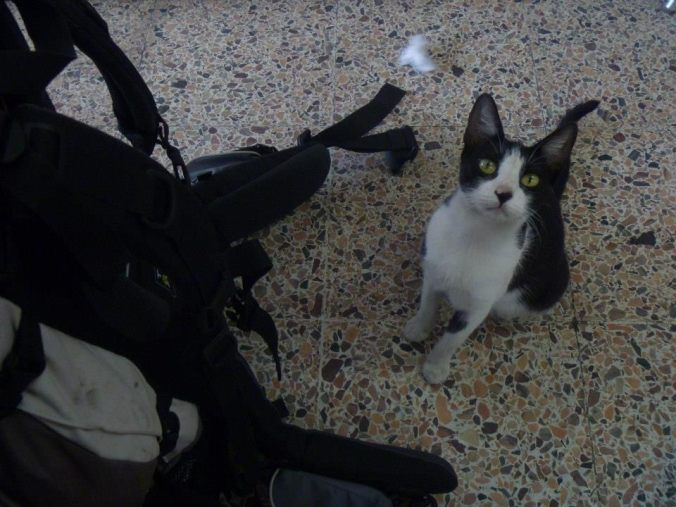 I had just gotten off the bus in Barranquilla and was eating lunch at the station when this little cutie came over to see if I would drop anything. He stayed sitting next to my backpack like that until I finished.